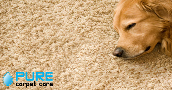 dog odor in carpet